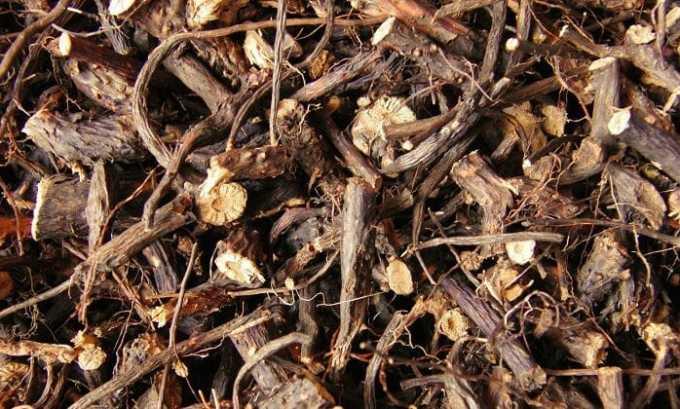 Из корней лапчатки белой можно приготовить лекарственный настой, который поможет при гипертиреозе