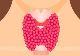 Нормальные размеры щитовидной железы
