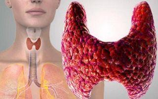 Тиротропин (ТТГ) и его роль в организме человека