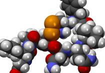 Показатели нормы гормонов щитовидной железы у женщин и причины отклонения