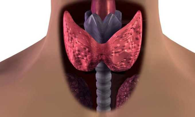 Щитовидная железа — важнейший секреционный орган эндокринной системы человека