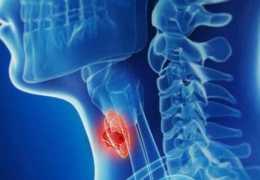 Строение и функции щитовидного хряща