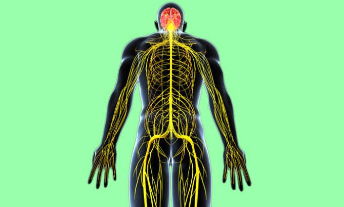 Т4 в организме человека выполняет функцию регуляции работы центральной нервной системы