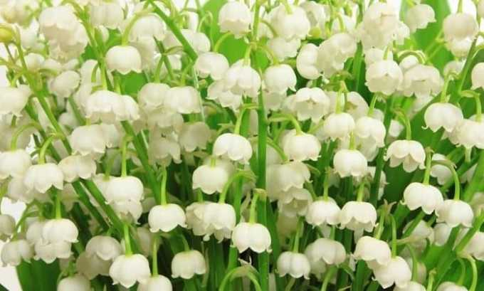 При гипотиреозе можно пить настойку цветов майских ландышей