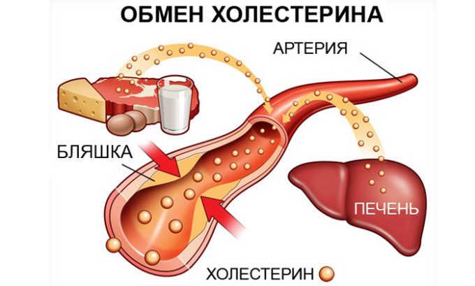 CT4 нормализует уровень холестерина