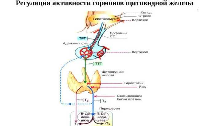 Часто узлы на щитовидной железе появляются из-за опухоли гипофиза. Данный отдел головного мозга производит гормон, контролирующий деление клеток щитовидной железы