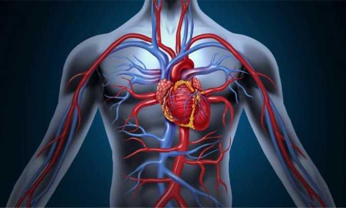 CT4 выполняет нормализацию работы сердца
