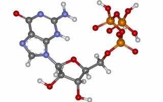 Характеристика, функции и нормы гормонов паращитовидной железы