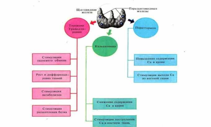 Анализ крови на гормоны используется для выявления нарушения функций щитовидной железы, вызванное образованием узла в правой доле