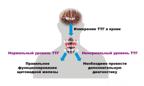 Нормальные значения тиреотропного гормона зависят от пола и возраста, а также определяются состоянием здоровья человека