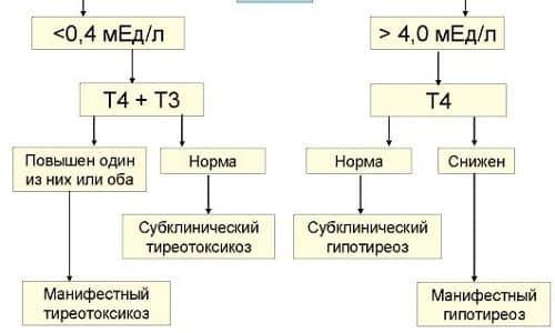 Показатель ТТГ (тиреотропина) определяет концентрацию в крови трийодтиронина (Т3) и тироксина (Т4), вырабатываемых щитовидной железой