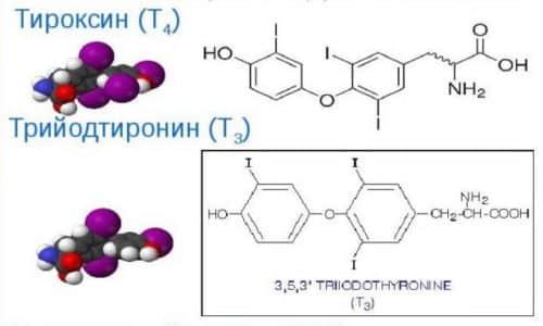 Трийодтиронин образуется при распаде другого гормона — тироксина, когда один атом отделяется от него