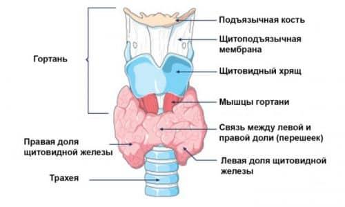 Заболевание сопровождается увеличением в размерах щитовидной железы. В результате этого она начинает давить на близлежащие органы и ткани - трахею, гортань и др