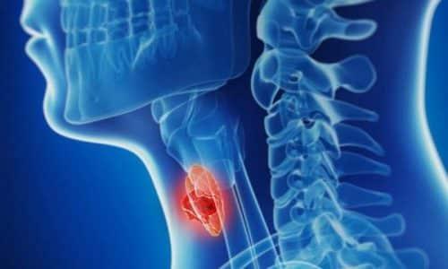 Являясь главным элементом внутренней секреции, железа управляет всеми процессами жизнедеятельности, влияя на другие органы организма человека